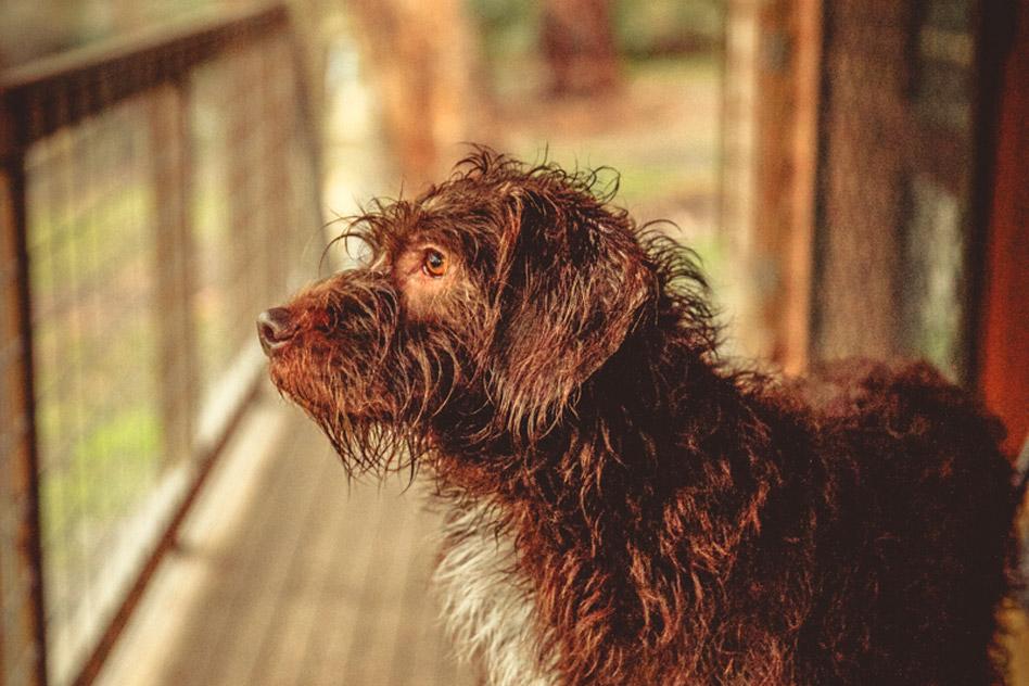 pet-friendly-dog-1