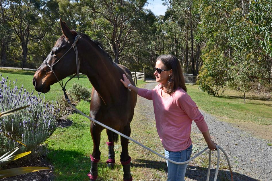 pet-friendly-horses-3