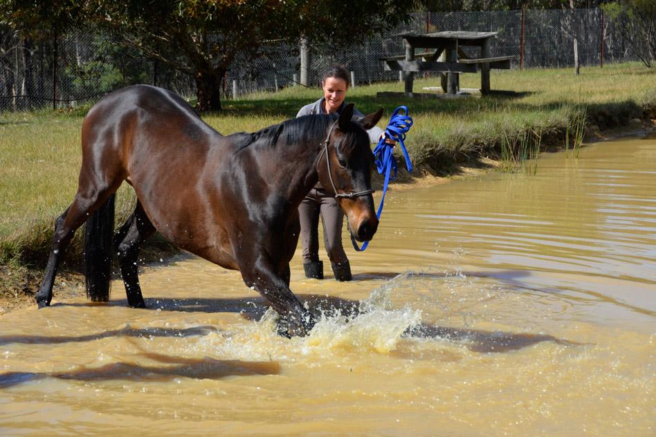 pet-friendly-horses-4
