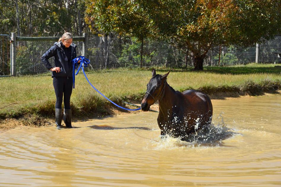 pet-friendly-horses-5