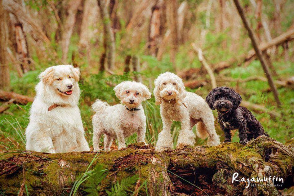 holidaying-with-dogs-1