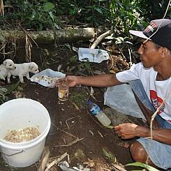 Dog Friendly Accommodation near Lorne - I Love Bali Street Dogs