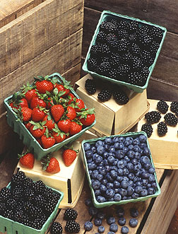 Whats on in the Otways - berries